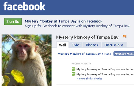 http://www.sexysocialmedia.com/wp-content/uploads/2010/03/mystery-monkey-facebook.jpg