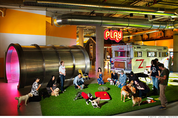 zynga staff with dogs